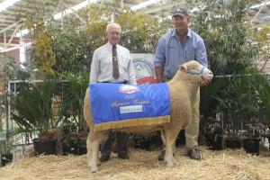 VV138/14 Supreme Exhibit Australasian Dorset Championships Bendigo 2015